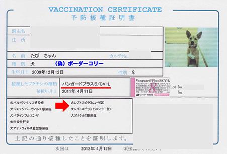たび予防接種のコピーのコピー