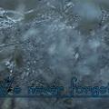 Photos: Snowflake