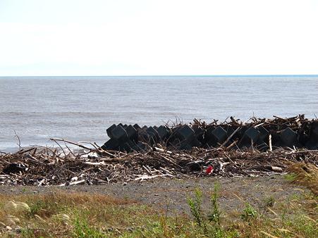 流木で埋まる海岸