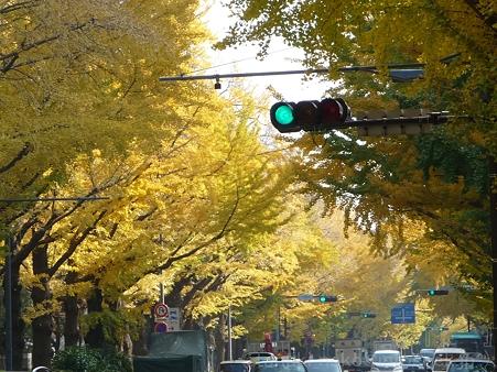 111130-横浜 紅葉  山下公園通り (5)