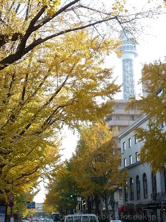 111130-横浜 紅葉  山下公園通り (26)