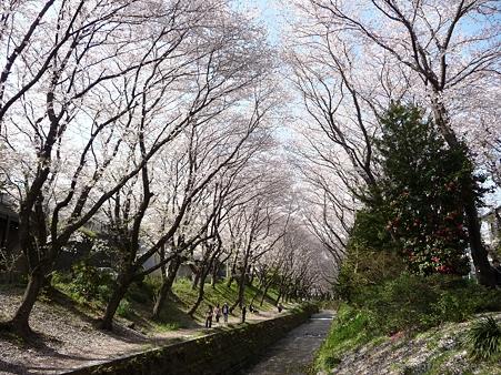 120412-千本桜 (45)