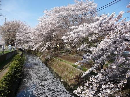 120412-千本桜 (115)