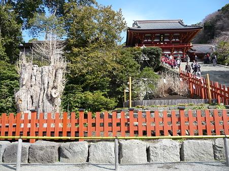 110225-鶴岡八幡宮 (34)