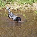 Photos: 狩猟犬