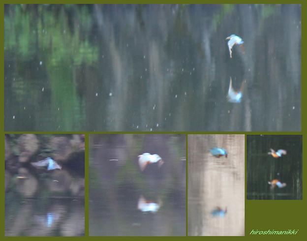 夏休みの宿題(1) 鳥の観察