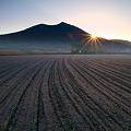 Photos: 強霜の麦畑