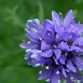 写真: 201105flower 478