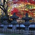 牡丹苑の紅葉