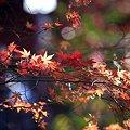 紅葉の清水観音堂3