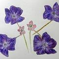 葉が紫のオキザリス