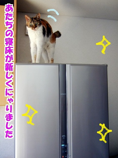 省エネ冷蔵庫