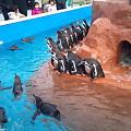 写真: ペンギンのおさわり