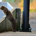 Photos: 吉備路鶴の里、猫ちゃん ♪