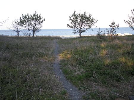 海へ 散歩道 (1)