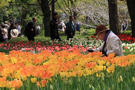 2012.04.19 横浜公園 チューリップ 特等席