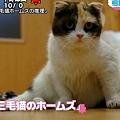 Photos: こちらが共演の三毛猫ホームズちゃん