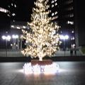 Photos: ぼやぼやツリー