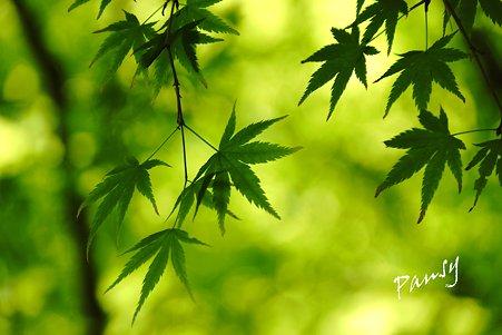 green..2