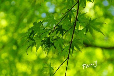 green..3