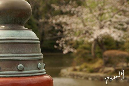桜彩・・鶴岡八幡宮 4