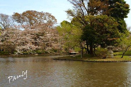 桜彩・・鶴岡八幡宮 7