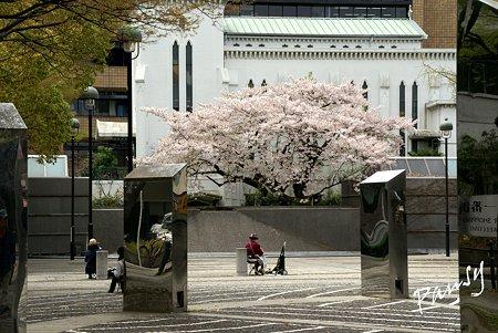 横浜 桜 sketch..5