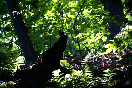 光に浮かぶ樹の株・・summer green..1