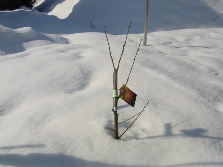 RIMG8399雪の中 サイズ変更