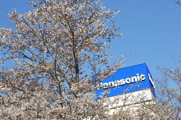 桜パナソニック