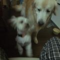Photos: 小さな犬は平気、大きな犬が怖い