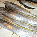 Photos: エスパダ 太刀魚