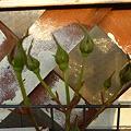 Photos: 2011.12 garden 005