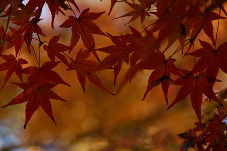 晩秋の紅葉染まる!(111210)