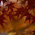 写真: 晩秋の紅葉染まる!(111210)