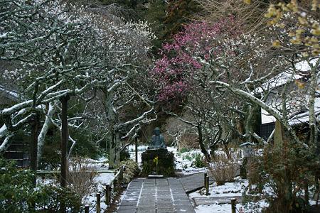 雪と梅の参道!(110212)