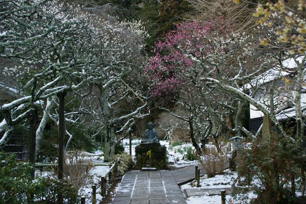 Photos: 雪と梅の参道!(110212)