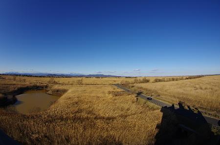 猛禽フィールドの風景