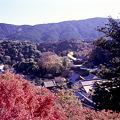 Photos: 長谷寺から見渡す