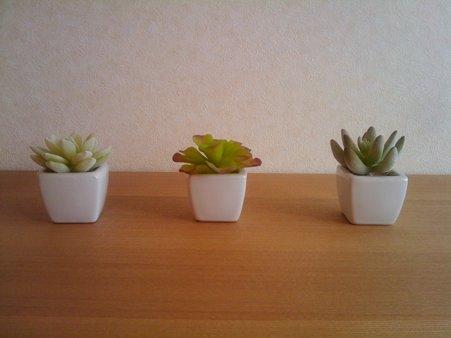 寝室の植物