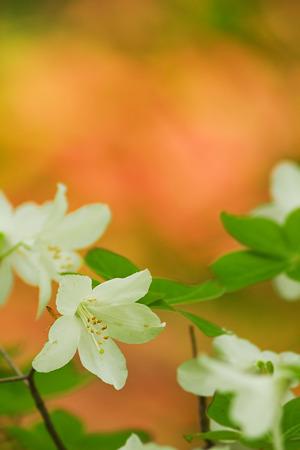 赤い中の白い花