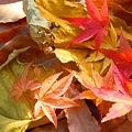 Photos: 落ち葉たち