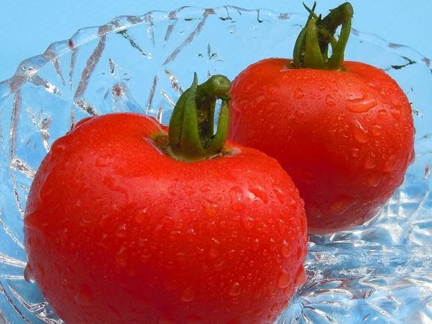初収穫デルモンテ~ワクチン接種トマト~