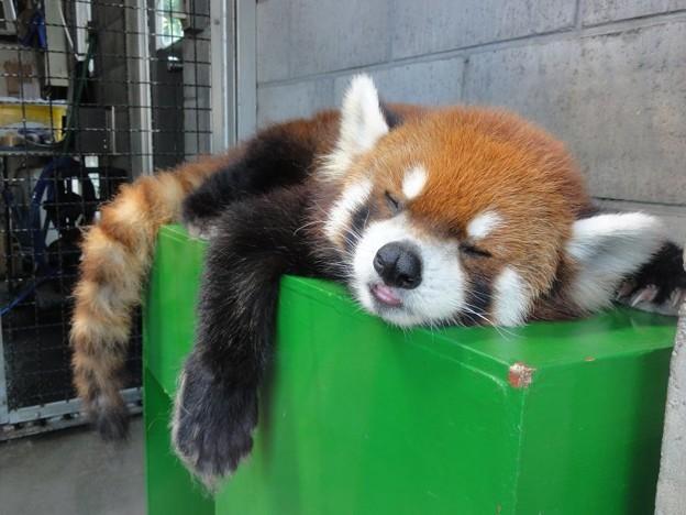 眠い - 写真共有サイト「フォト蔵」
