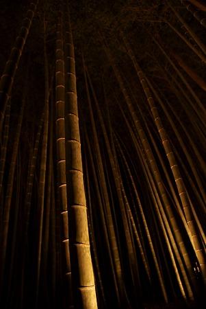 嵐山竹林・照光