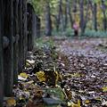 秋の散策路