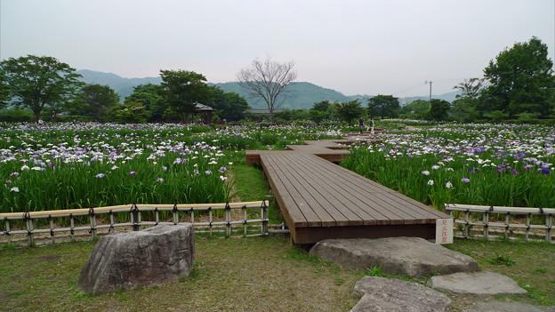 大和花しょうぶ園(15)