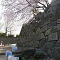 舞鶴公園の桜(12)