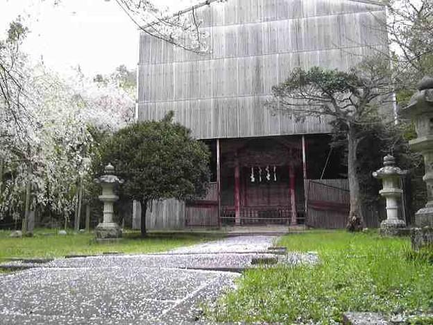 フォト蔵井伊神社、なんか覆われてる...アルバム: Twitter (240)写真データフォト蔵ツイート