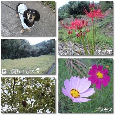 20110923 お散歩2